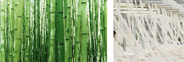 bamboo plant for fabric fibres